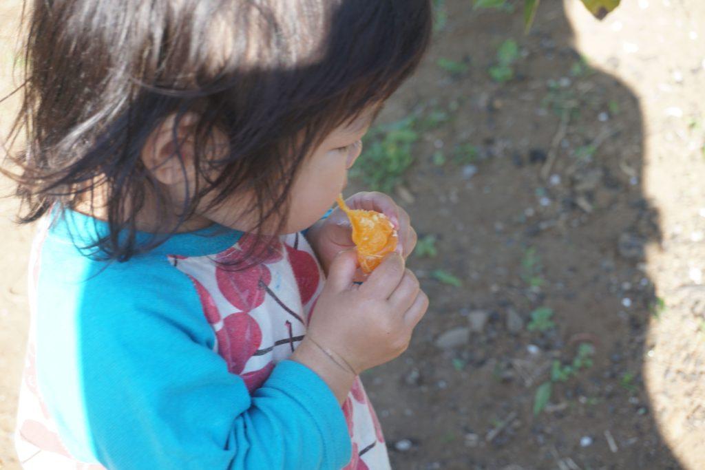 小さい子も大好きなみかんが食べ放題