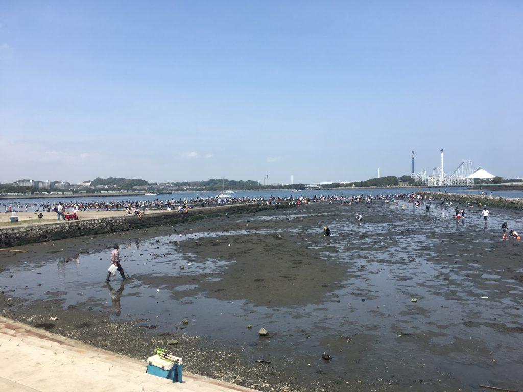 横浜野島公園の潮干狩り